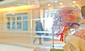 Doctor teaching skull